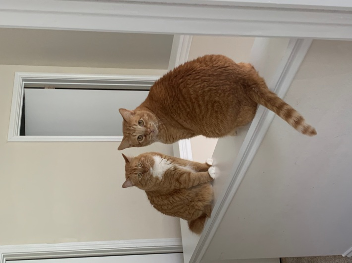 Two plump orange Tabby cats sitting on a stair banister